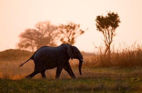 safari de Kenia