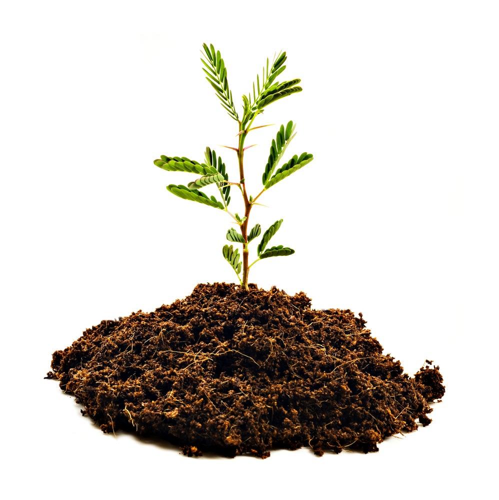 Resultado de imagen para plantar arbol gif