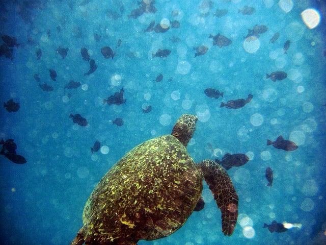 Tortugas en el agua