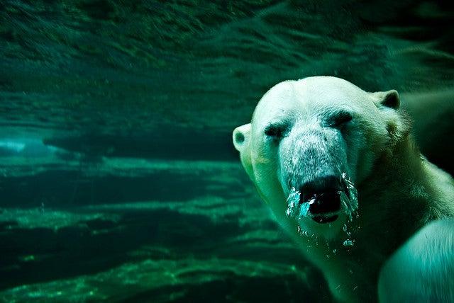 Zoo de Memphis