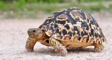 Invasión de tortugas en la pista de aterrizaje del aeropuerto de Nueva York