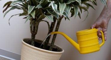 ¿Quién riega las plantas en vacaciones? Conoce los hoteles especiales para ellas