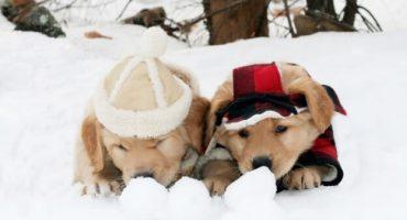 Las 10 mejores fotos en la nieve