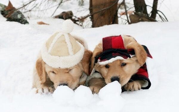 fotos nieve
