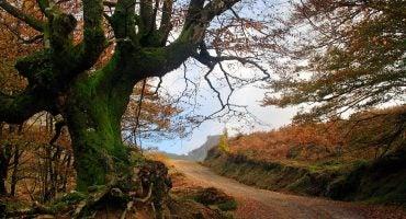 El Parque Natural de Gorbeia, el pulmón de oxígeno de Bizkaia y Álava