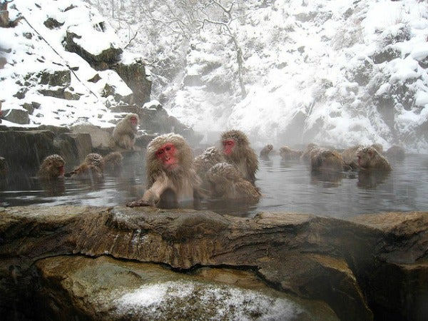 Monos de nieve en aguas termales