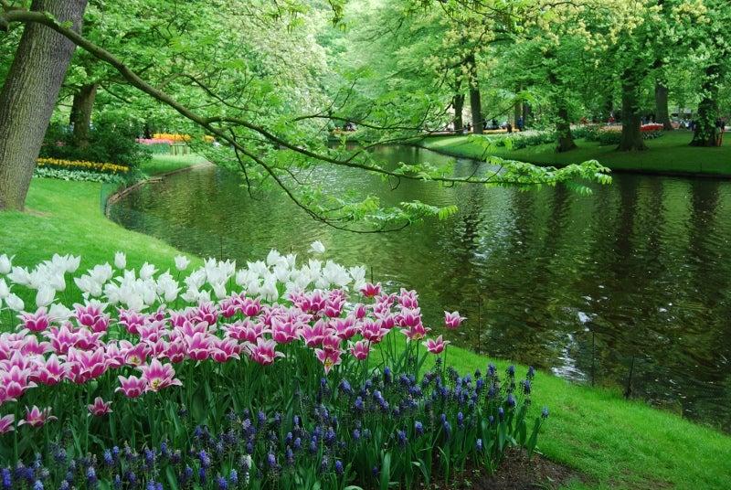 Escapada primaveral a holanda blog de viajes edreams for Jardines de primavera