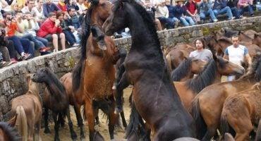 'Rapa das bestas', un espectáculo único en Galicia