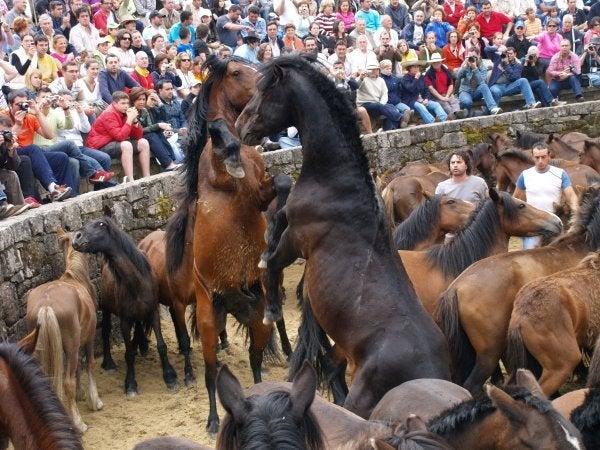 Rapa das bestias, Galicia