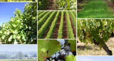 De vinos por Europa…