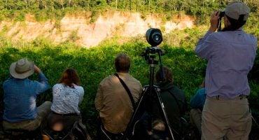 Cómo hacer fotos profesionales en la selva de Tambopata sin ser experto