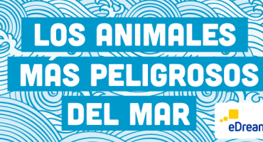 5 animales marinos peligrosos: prevención y remedios