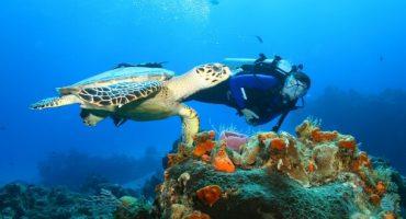 5 viajes al mundo submarino [vídeos]