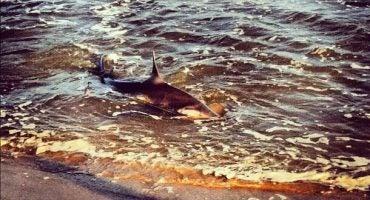 12 fotos de tiburones en Instagram