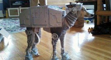 10 originales disfraces de Halloween para tus mascotas