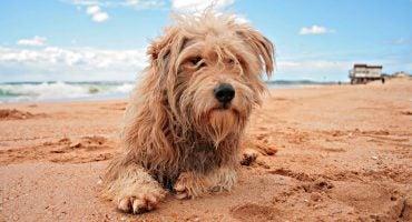 Viajar con animales domésticos en el AVE