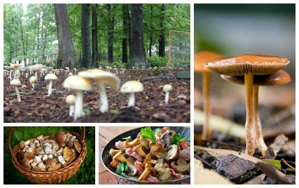 setas y turismo micológico