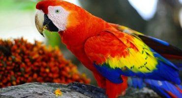 Los animales con los colores más increíbles del mundo