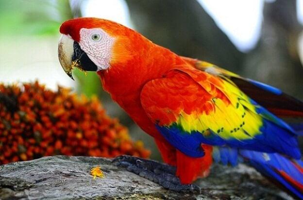 destacado animales colores