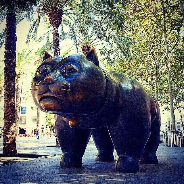 30 actividades que hacer si visitas Barcelona. Gato Raval