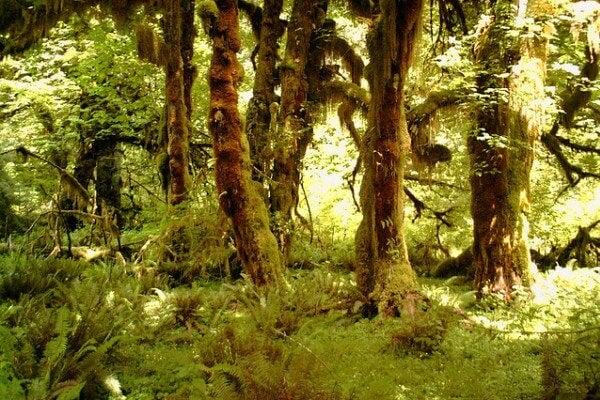 Selva de Hoh