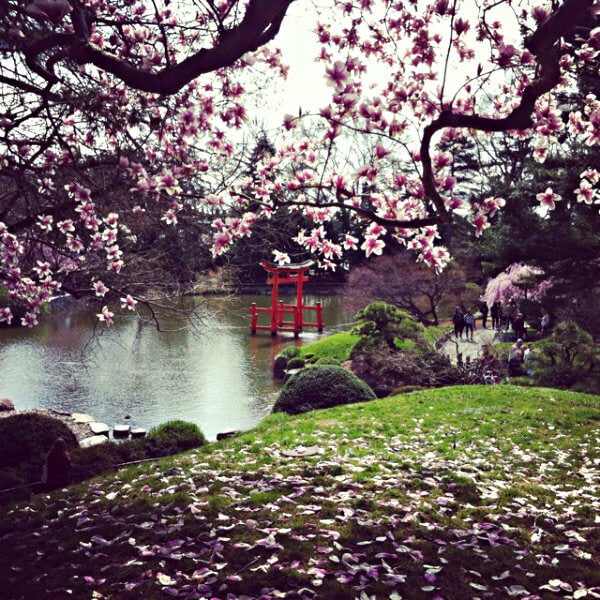 jardin japones brooklyn