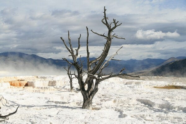mammoth-hot-spring