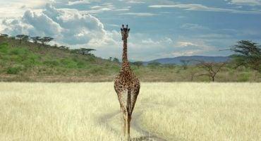 Turismo en África. Conoce los animales más impactantes