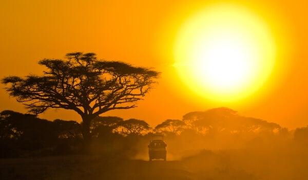 safari post