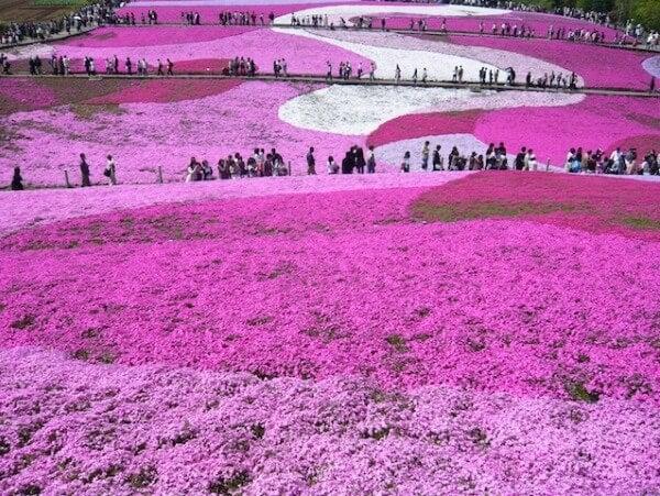Flower Park de Higashimokoto