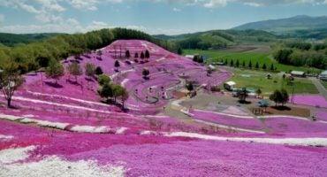Las fotos más increíbles de la colina de flores más impresionante del mundo