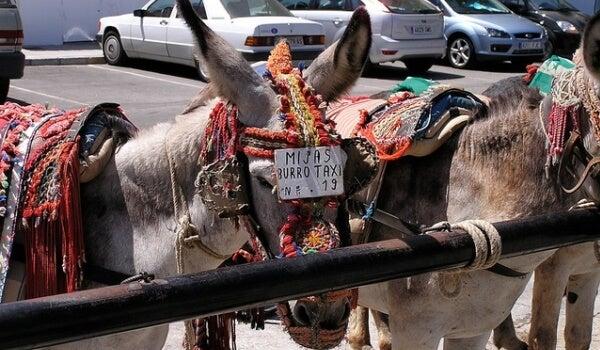 Biurro-taxi. Foto de Miisha en Flickr