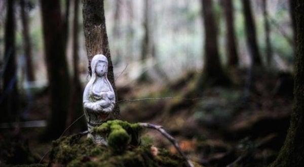 Bosque Aokigahara, Japón. Foto de Antoinette Zapata en Pinterest