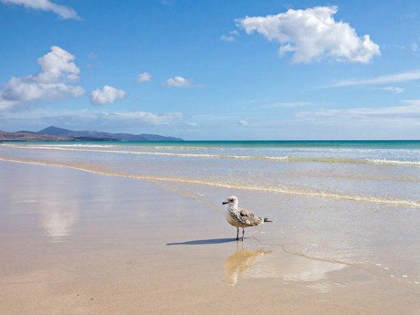 spiaggia fuerteventura con gabbiano
