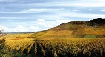 5 regiones de vinos para visitar al menos una vez en la vida