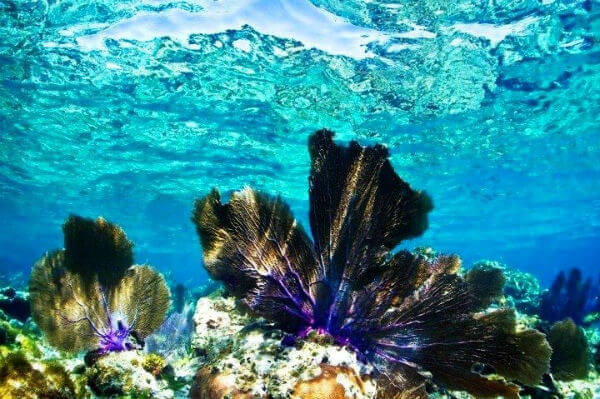 arrecife coral cayos cochinos honduras