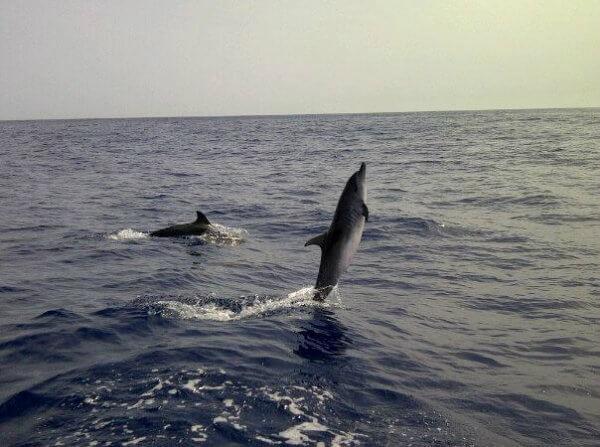 delfines en madeuira