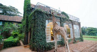 20 hoteles originales que ver antes de morir