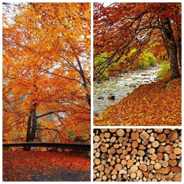 Ordesa durante o Outono