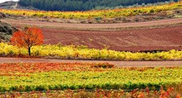 Lugares de España para ver en otoño