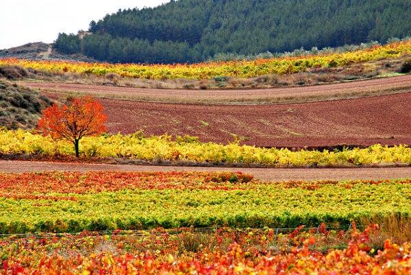Outomo na La Rioja