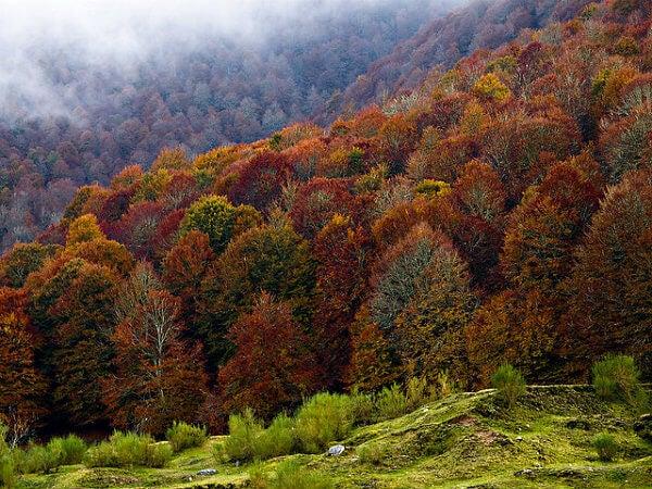 Bosques de Sajambre durante o Outono