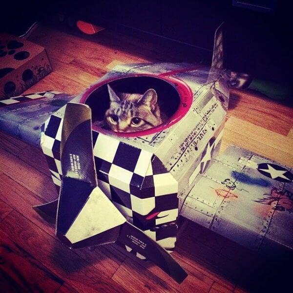 gato avion