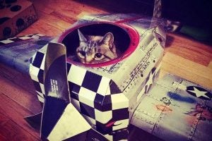 Gatos y perros viajeros en el Día Mundial de los Animales