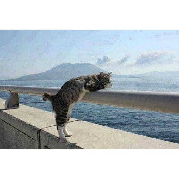 gato vistas