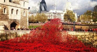 Las mejores fotos del río de amapolas que inundó la Torre de Londres