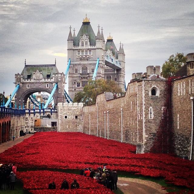 amapolas en la torre de Londres