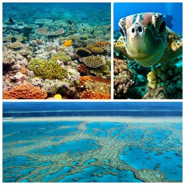 collage della gran barriera corallina in australia