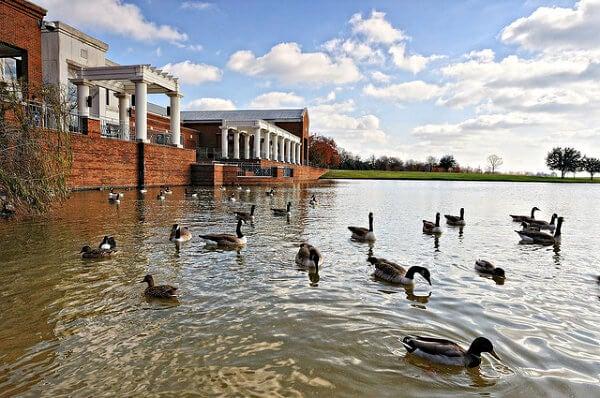 lago de patos en el museo de montgomery