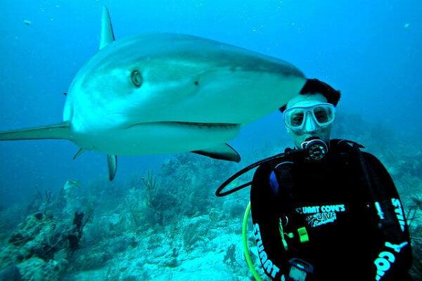 bahamas tiburon